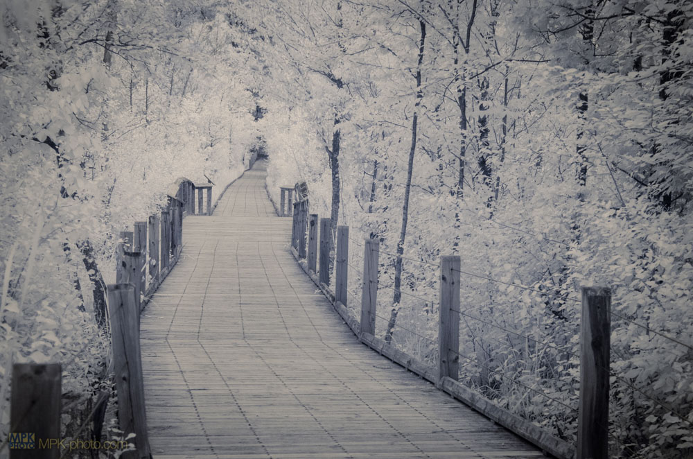 Infrared landscape elevated walkway